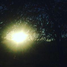 WEBSTA @ sofil88 - Bom dia para quem vai trabalhar 24h seguidas e está de directa 😎✌🏻️😴😑..................#boaanasofia #sundaymorning #domingo #workonsunday #ineedtosleep #morning #goodmorning #sun #nature #sol #natureza #breathing #youcandoit #bestrong #ineedcoffee #coffee #like4like #likeforlike #november #novembro #fall #autumn #outono