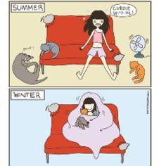 http://catversushuman.blogspot.com/ Cat vs human