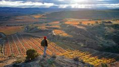 If you know your wine, then you must have heard about, La Rioja, the wine capital of Spain. With 500 wineries, La Rioja is globally renowned for the quality of its wines. Rioja Spain, Rioja Wine, Spanish Wine, Spain Holidays, Spain And Portugal, Wine Country, Basque Country, Spain Travel, Places To See