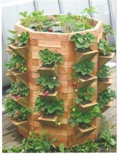 Jardinière à fraisiers