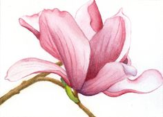 Old Paint-A Thirty Year Retrospective magnolia