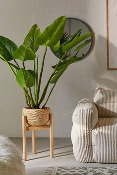 Rattan Planters, Indoor Planters, Plants Indoor, Indoor Gardening, Indoor Herbs, Wall Planters, Succulent Planters, Concrete Planters, Air Plants