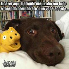 BOM DIA PESSOAL! <3 #petmeupet #cachorro #filhode4patas