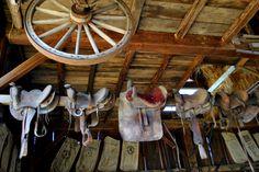 #Saddles #Barn #horses