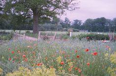 Morgenster zaden, hier kun je ecologisch geteelde zaden van wilde bloemen bestellen