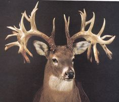 Non-typical deer... or in my words. this looks fake. But I would DIE if this walked out on me