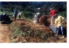 Com o objetivo principal de divulgar os conhecimentos adquiridos,  baseados nas pesquisas realizadas na Epagri/Estação Experimental de Urussanga em Santa Catarina,  nas consultas bibliográficas e, na experiência adquirida nos 32 anos de vida profissional como pesquisador da Epagri na área de hortaliças.