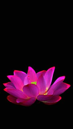 40 Beautiful Flower Wallpapers Free To Download Lotus Flowers
