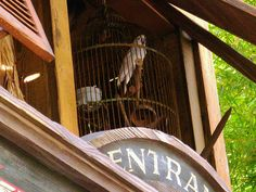 Real live birds at the Jungle Cruise.