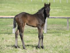Filly Pierro x Bella Maddelena