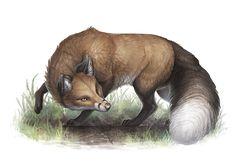 Aventuria Bestiary - Fox by GaiasAngel on DeviantArt