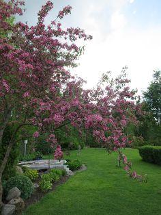 Puutarhan Lumo: Makamik kukkii Sidewalk, Gardening, Side Walkway, Lawn And Garden, Walkway, Walkways, Horticulture, Pavement