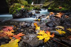 "500px / Photo ""Oregon Fall"" by Brian Powers"