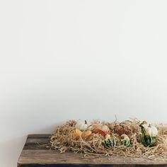 pumpkins, squash, halloween vegetable, vegetation, dry grass, table