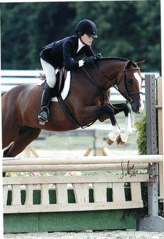Hunter Jumper Horses for Sale Pretty Horses, Horse Love, Horse Riding Fashion, Hunter Horse, Pony Breeds, Ponies For Sale, Dream Barn, Hunter Jumper, Show Jumping