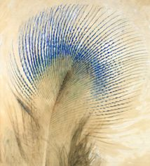 Welcome to the Ruskin Library and Research Centre: Museum of the Near Future. Bird Feathers, Ruffled Feathers, John Ruskin, Watercolor Techniques, Botanical Art, Spirit Animal, Peacock, Sketches, Nests