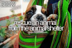 Bucket list - rescue an animal from the animal shelter