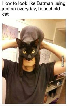 Batman cat!