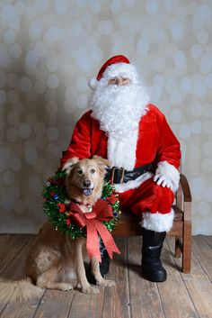 Please vote for this entry in PawsWay's Reindeer Roundup!