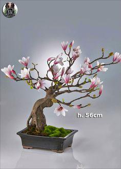 -magnolia-duke-bonsai-cvaso-h56.jpg (1000×1400)