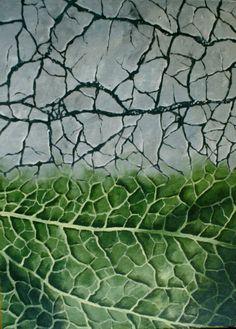 leaf structure, acrylic painting 50 x 70 cm Leaf Structure, Nature Paintings, Plant Leaves, Plants, Paintings Of Nature, Plant, Nature Drawing, Planets