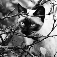 black and white cat by Elea La Fleur, via 500px