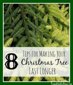 Wondering how to make a Christmas Tree last longer? Use these 8 Tips for Making Your Christmas Tree Last Longer to keep your fresh-cut tree looking good through the holidays.