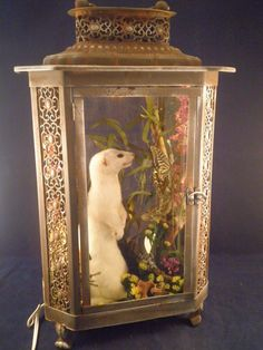 Antique Victorian inspired taxidermy Ermine by VictorianTaxidermy, $189.00