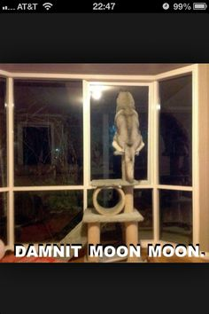 Damnit Moon Moon get off the cat house!