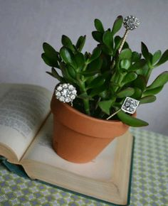 Mother's Day Gift. Mini Plant with decorative hat pins.