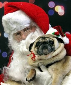 """""""I know you asked for a pug for Christmas, but I love this lil guy too much so sorry not sorry. Bye, we're going sleighing!"""""""