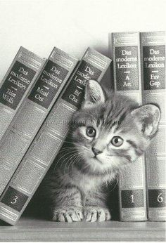 In cat lady's library