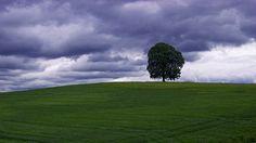 tree at the horizon