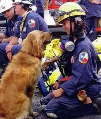 The last living search and rescue dog from 15 year old Golden Retriever, Bretagne and her owner/ handler, Denise Corliss. Perros Golden Retriever, Old Golden Retriever, Retriever Dog, Golden Retrievers, Search And Rescue Dogs, Dog Search, Amor Animal, Animal Pics, Service Dogs
