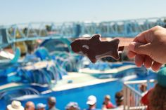 One of our favorite treats! A Shamu Bar being enjoyed at Blue Horizons at @SeaWorld
