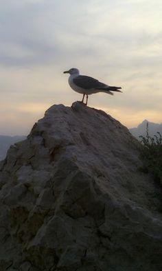 una gaviota contemplando la naturaleza de calpe