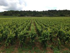 Vougeot à Bourgogne
