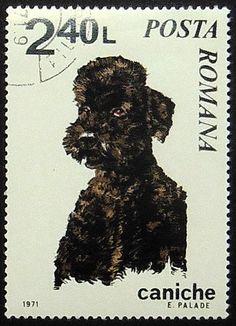 Poodle Dog Caniche Handmade Framed Postage Stamp Art 20936AM