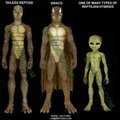 """""""Various types of bipedal, upright walking reptoids have been reported. The three most common types are:"""""""