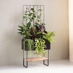 Viherlaatikko - Kekkilä Living Room, Interior, Plants, Indoor, Home Living Room, Drawing Room, Interiors, Plant, Lounge