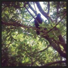 #instawalk #instagram #photo #zaanseschans #zaansmuseum #bird #vogel