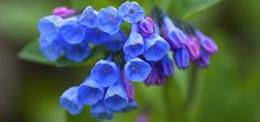 Image result for beautiful flowers in the world