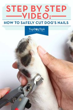 How To Cut Dog's Nails 101: A Step by Step Video Guide. If you groom your dog yourself, learning how to cut dog's nails may not seem like a very important part of his grooming regiment, but in fact, it is. Without proper nail care your pet could experience a lot of pain and discomfort. Learning how to trim dog nails will make you feel more comfortable and ensure that you won't cut the quick by accident. #doggrooming #dogs #dognails