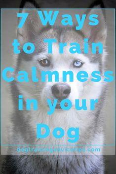 7 Ways to Train Calmness in your Dog - Dog Obedience Training Tips - Chien Basic Dog Training, Training Your Puppy, Training Dogs, Training Schedule, Training Classes, Training Online, Agility Training, Dog Agility, Potty Training