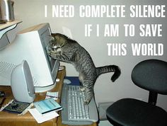 Funny Cat Pictures with Words | Funny cats pictures with words