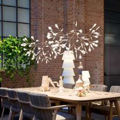 Moooi Heracleum Collection