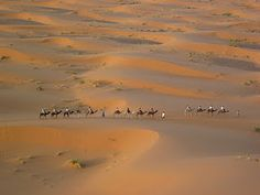 Looking Down On Camel Train, Merzouga, Morocco
