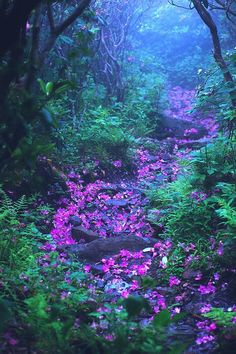 Rhododendron laden forest trail on Mount Rogers in western Virginia photo by David Mosner Foto Nature, All Nature, Amazing Nature, Nature Pics, Beautiful World, Beautiful Places, Beautiful Forest, Beautiful Flowers, Forest Trail