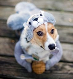 Squirrel costume . . . I could not do this to Luna! But it is cute