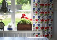 Pretty curtains and geraniums in the window